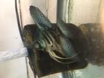 Thumbnail for fwangelfish1583158419