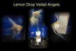 Thumbnail for fwangelfish1586013854