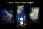 Thumbnail for fwangelfish1586040002