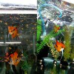 fwangelfish&1597536191 Thumbnail