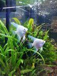 fwangelfish&1597536967 Thumbnail