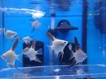 fwangelfish&1607194089 Thumbnail