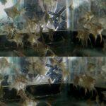 fwangelfish&1607219642 Thumbnail