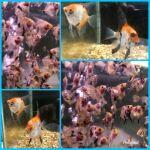 fwangelfish&1607302547 Thumbnail