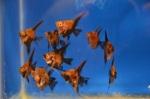 Thumbnail for fwangelfish1607719828