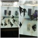 Thumbnail for fwangelfish1614566603