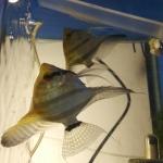 fwangelfish&1614603084 Thumbnail
