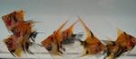 fwangelfish&1614627602 Thumbnail