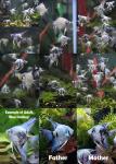 fwangelfish&1614640202 Thumbnail