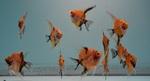 fwangelfish&1614816602 Thumbnail