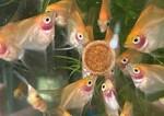 Thumbnail for fwangelfish1615513420
