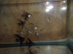 fwangelfish&1620264149 Thumbnail