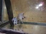 fwangelfish&1620265302 Thumbnail