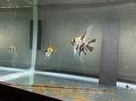 fwangelfish&1620595824 Thumbnail