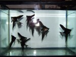 fwangelfish&1620597630 Thumbnail