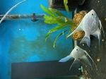 fwangelfish&1620598746 Thumbnail