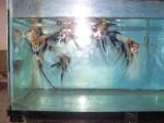 fwangelfish&1620598821 Thumbnail