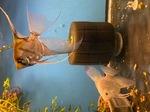 fwangelfish&1627256815 Thumbnail