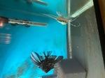 fwangelfish&1627257139 Thumbnail