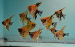fwangelfish&1627353604 Thumbnail