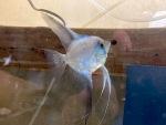 fwangelfish&1627518053 Thumbnail