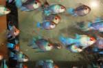 Thumbnail for fwapisto1569729004