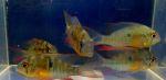 Thumbnail for fwapisto1571356148