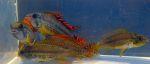 Thumbnail for fwapisto1583029831