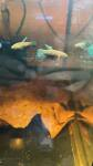fwbettas&1634957165 Thumbnail