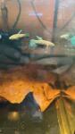 Thumbnail for fwbettas1635554918
