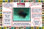 Thumbnail for fwbettasct1560791327