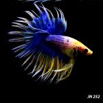 fwbettasct&1604028004 Thumbnail