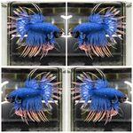 fwbettasct&1614805804 Thumbnail