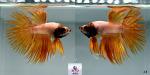 fwbettasct&1633230010 Thumbnail