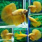Thumbnail for fwbettashm1540302011