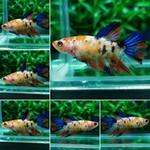 fwbettashm&1553615409 Thumbnail