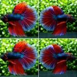 Thumbnail for fwbettashm1566466807