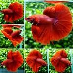 Thumbnail for fwbettashm1566734406