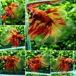 Thumbnail for fwbettashm1569062407