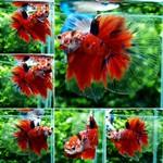 Thumbnail for fwbettashm1569062410