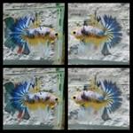 Thumbnail for fwbettashm1569117608