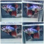 Thumbnail for fwbettashm1569120606