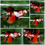 Thumbnail for fwbettashm1571589014