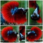Thumbnail for fwbettashm1571590219