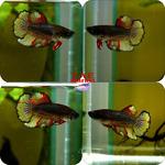 Thumbnail for fwbettashm1582738806