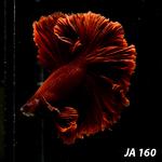 Thumbnail for fwbettashm1583071202