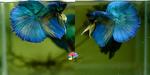 Thumbnail for fwbettashm1611680402