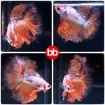Thumbnail for fwbettashm1631970003