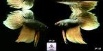 Thumbnail for fwbettashm1635303014