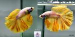 Thumbnail for fwbettashm1635564605